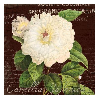 https://imgc.allpostersimages.com/img/posters/white-camilla-1_u-L-F6FZMR0.jpg?p=0