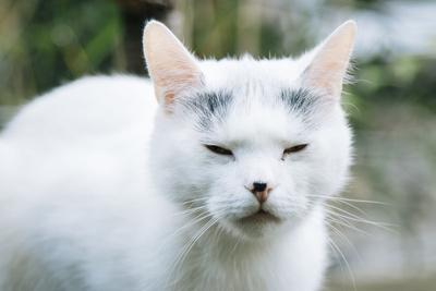 https://imgc.allpostersimages.com/img/posters/white-cat-on-a-terrace_u-L-Q1EXK4Z0.jpg?artPerspective=n