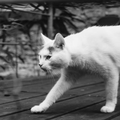https://imgc.allpostersimages.com/img/posters/white-cat-on-a-terrace_u-L-Q1EXKE30.jpg?artPerspective=n