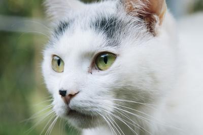 https://imgc.allpostersimages.com/img/posters/white-cat-on-a-terrace_u-L-Q1EXKFH0.jpg?artPerspective=n