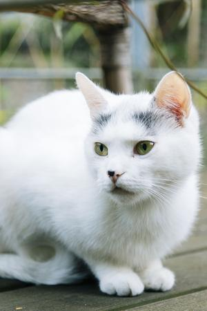 https://imgc.allpostersimages.com/img/posters/white-cat-on-a-terrace_u-L-Q1EXKMM0.jpg?artPerspective=n