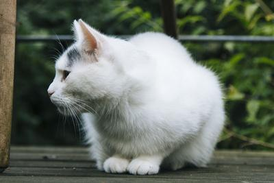 https://imgc.allpostersimages.com/img/posters/white-cat-on-a-terrace_u-L-Q1EXLCY0.jpg?artPerspective=n