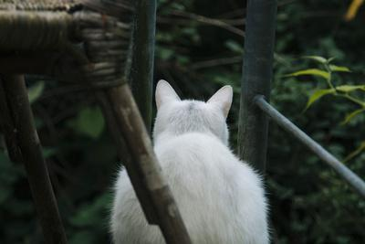 https://imgc.allpostersimages.com/img/posters/white-cat-on-a-terrace_u-L-Q1EXLI00.jpg?artPerspective=n