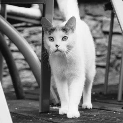 https://imgc.allpostersimages.com/img/posters/white-cat-on-a-terrace_u-L-Q1EXLPY0.jpg?artPerspective=n