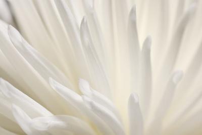 https://imgc.allpostersimages.com/img/posters/white-flower_u-L-Q1BK7C80.jpg?p=0