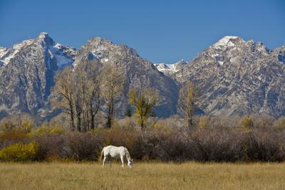 https://imgc.allpostersimages.com/img/posters/white-horse-and-teton-mts-moose-head-ranch-grand-teton-national-park-wyoming_u-L-PU3HDQ0.jpg?artPerspective=n