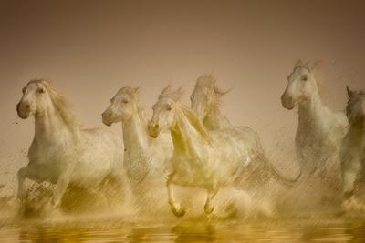 https://imgc.allpostersimages.com/img/posters/white-horses-of-camargue-france-running-in-mediterranean-water_u-L-PU3HEK0.jpg?p=0
