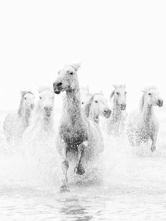 https://imgc.allpostersimages.com/img/posters/white-horses-of-camargue-running-through-the-water-camargue-france_u-L-PXT60J0.jpg?p=0