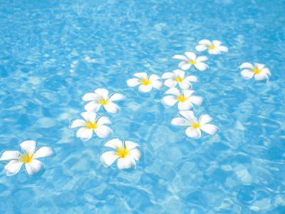White Jasmines Floating on Water