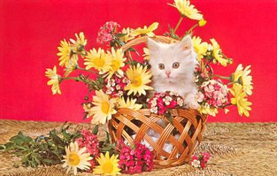 White Kitten in Basket of Daisies