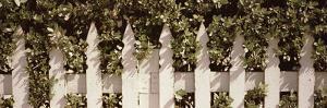 White Picket Fence Surrounded by Bushes Along Truman Avenue, Key West, Monroe County, Florida, USA
