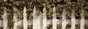 White Picket Fence Surrounded by Bushes Along Truman Avenue, Key West, Monroe County, Florida, USA