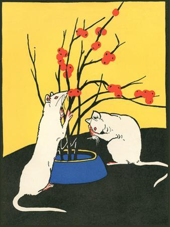 White Rats, Red Berries