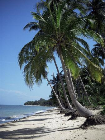 https://imgc.allpostersimages.com/img/posters/white-sandy-beach-and-leaning-palm-trees-koh-samui-thailand-southeast-asia_u-L-P1TQ660.jpg?p=0