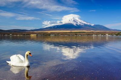 https://imgc.allpostersimages.com/img/posters/white-swan-with-mount-fuji-at-yamanaka-lake-yamanashi-japan_u-L-Q105M5Q0.jpg?p=0