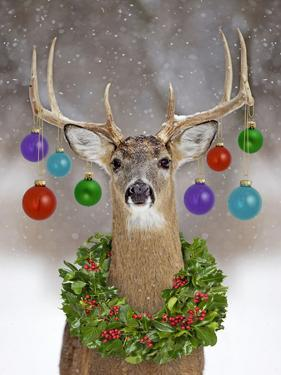 White-Tailed Deer Buck in Winter Snow with Christmas