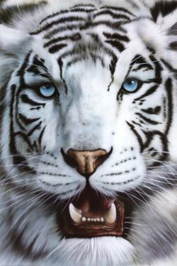 White Tiger (Tigre Blanco) Art Poster Print