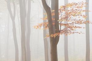 Arnhem Park Zypendaal by Wilco Dragt