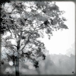 Sun Dappled I by Wild Apple Photography