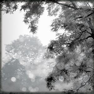 Sun Dappled II by Wild Apple Photography