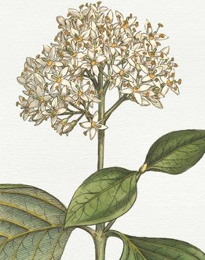 Botanique Blue IV on White No Words by Wild Apple Portfolio