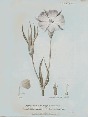 Conversations on Botany III Blue by Wild Apple Portfolio