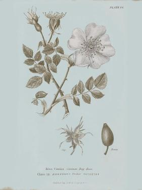 Conversations on Botany IV Blue by Wild Apple Portfolio