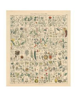 Flora Chart II by Wild Apple Portfolio