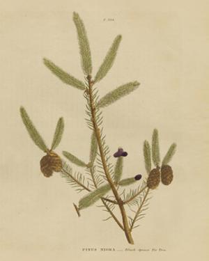 Herbal Botanical XIV by Wild Apple Portfolio