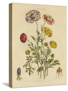Herbal Botanical Xxii by Wild Apple Portfolio