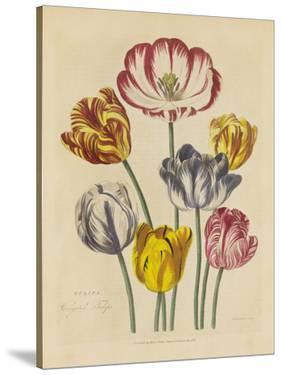Herbal Botanical Xxiii by Wild Apple Portfolio