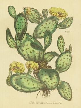 Herbal Botanical XXIX by Wild Apple Portfolio