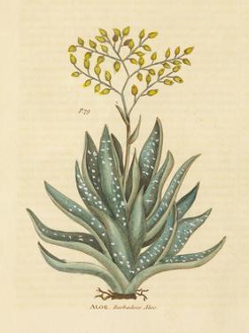 Herbal Botanical XXXI by Wild Apple Portfolio