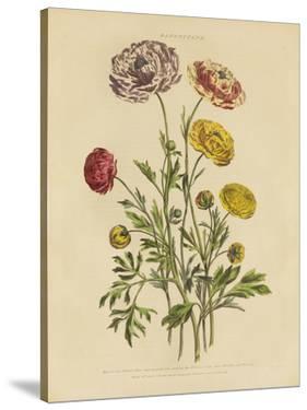 Herbal Botany Xxii V2 by Wild Apple Portfolio