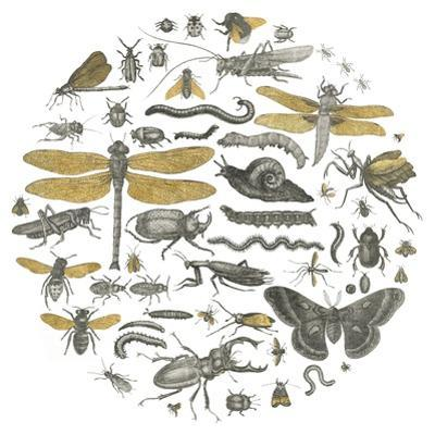 Insect Circle I by Wild Apple Portfolio