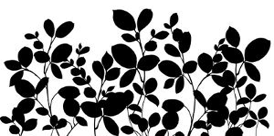 Leafy Grove by Wild Apple Portfolio