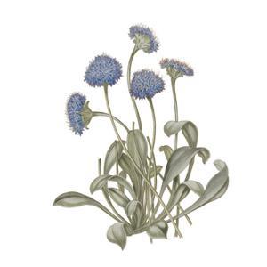 Monument Etching Tile Flowers IX by Wild Apple Portfolio