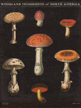 Mushroom Chart III by Wild Apple Portfolio