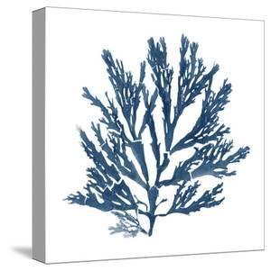 Pacific Sea Mosses Blue On White I by Wild Apple Portfolio