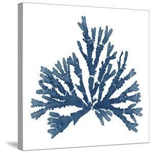 Pacific Sea Mosses Blue On White Iv by Wild Apple Portfolio