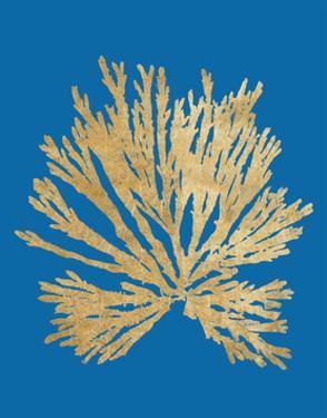 Pacific Sea Mosses II Blue by Wild Apple Portfolio