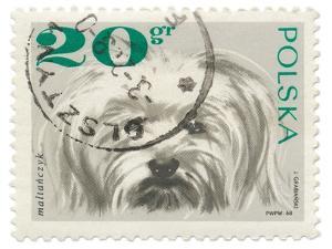 Poland Stamp II on White by Wild Apple Portfolio