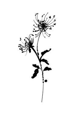 Silhouette Floral IV by Wild Apple Portfolio