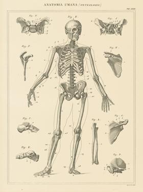 Skeleton Chart by Wild Apple Portfolio