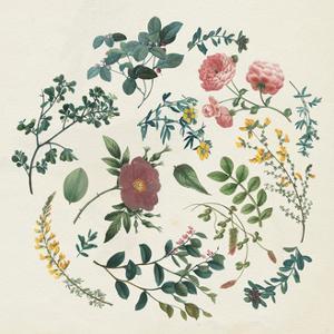 Victorian Garden II by Wild Apple Portfolio