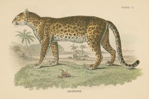 Vintage Leopard by Wild Apple Portfolio