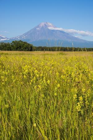 https://imgc.allpostersimages.com/img/posters/wild-flower-field-and-the-avachinskaya-sopka-volcano-near-petropavlovsk-kamchatsky_u-L-PQ8SPN0.jpg?p=0