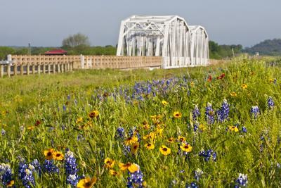 https://imgc.allpostersimages.com/img/posters/wild-flowers-by-highway-and-the-llano-river-texas-usa_u-L-PN713Y0.jpg?artPerspective=n