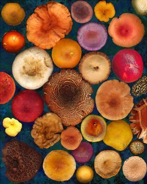 Wild Mushrooms all Caps Fungi Forest