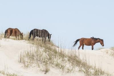 https://imgc.allpostersimages.com/img/posters/wild-mustangs-banker-horses-equus-ferus-caballus-in-currituck-national-wildlife-refuge_u-L-PXXWB20.jpg?p=0
